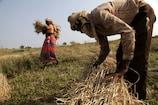 छत्तीसगढ़ में धान खरीदी पर संकट, केंद्र सरकार ने चावल खरीदने से किया इनकार