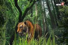 करौली में टाइगर का आतंक, एक और युवक को बनाया शिकार
