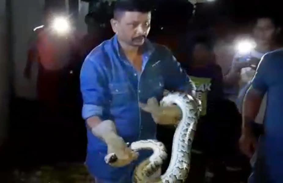 ये विशाल अजगर Burmese Python प्रजाति का है. ये प्रजाति अजगर की 5 सबसे विशाल प्रजातियों में शामिल की जाती है.