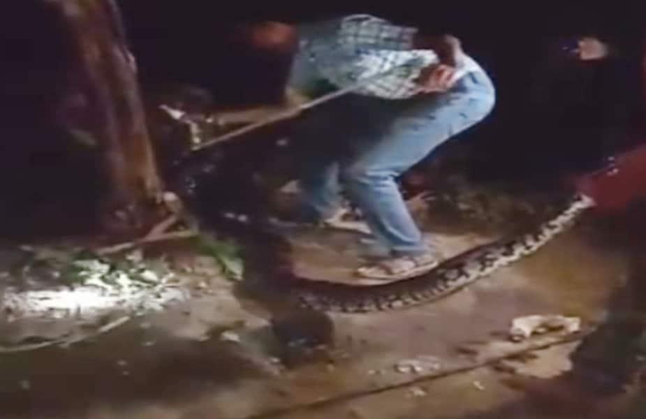 खरगोन. मध्य प्रदेश के खरगोन जिले के बड़वाह स्थित एक आश्रम में 13 फीट लंबा अजगर निकलने से हडकंप मच गया. रात के अंधरे में करीब एक घंटे की कड़ी मशक्कत के बाद अजगर को रेस्क्यू कर पकड़ा गया.
