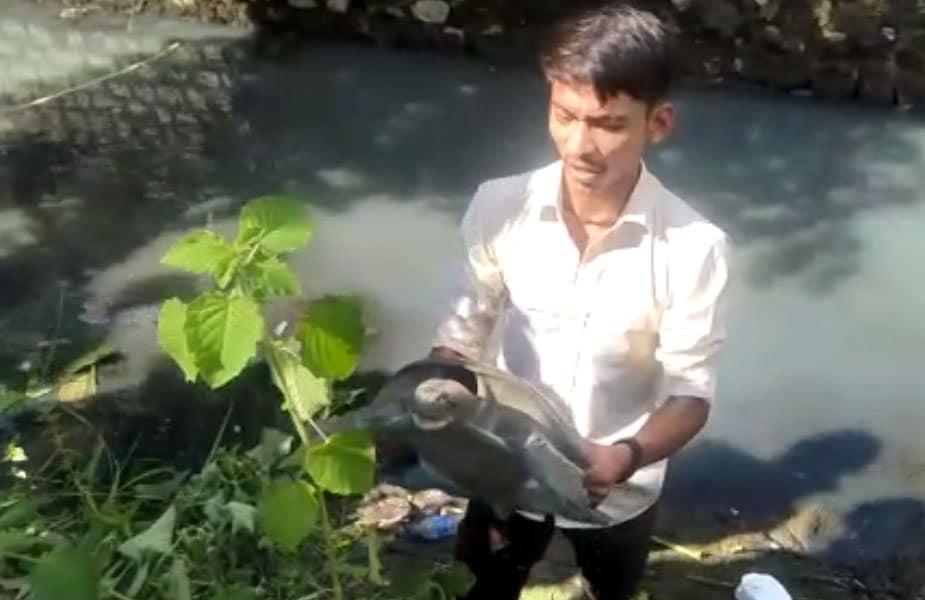 कछुआ मिलने की जानकारी जैसे ही वन्य जीव प्रेमी चन्द्रसेन कश्यप को मिली, तो वे उसे बचाने के लिए तुरंत वन विभाग टीम के साथ मौके पर पहुंच गए.