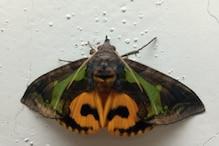 इस तितली को देखकर लोग कहते हैं- 'जय बजरंगबली', जानिए- क्या है मामला?