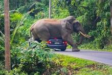 दंतैल हाथी गणेश ने मचाया उत्पात, महिला को पैरों तले कुचला, मौत