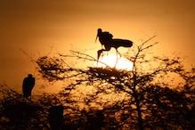 भरतपुर का केवलादेव राष्ट्रीय उद्यान देशी-विदेशी पक्षियों से हुआ गुलजार