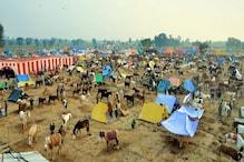 भारत में गधों की आबादी में 62% गिरावट, NGO ने जाहिर की चिंता