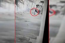 घर के बाहर खेल रही बच्ची पर आवारा कुत्ते ने किया हमला, गाल और आंख को काटा