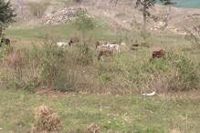 टिहरी: जंगली जानवरों के आतंक से परेशान किसान खेती छोड़ने को हुए मजबूर