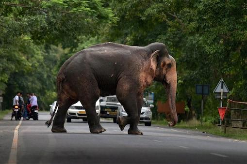 दो हाथियों में बीमारी का पता चलने के बाद पार्क की अन्य रेंज को भी अलर्ट कर दिया गया है. . (File Photo)