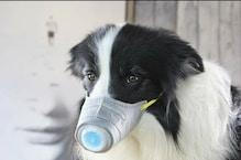 Corona virus: चीन में जानवरों को भी मास्क पहना रहे हैं लोग, Pics वायरल