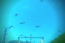 हाईवे पर कबूतरों का हैरतअंगेज VIDEO वायरल,देखें-गाड़ी का पीछा करते पर परिंदे