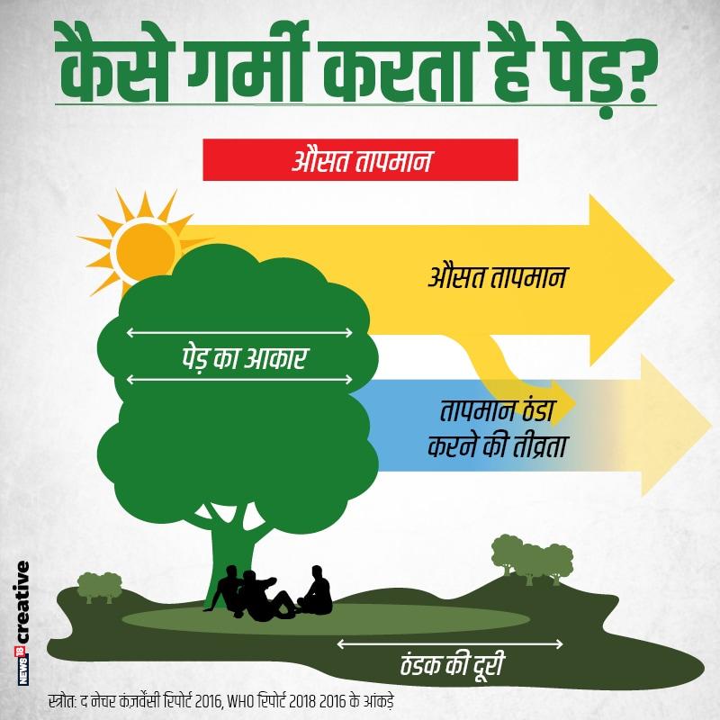 पेड़ कैसे गर्मी को कम करते हैं ये हम इस ग्राफिक से समझने की कोशिश कर सकते हैं.