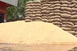 UP में गेहूं खरीद की तैयारियां पूरी,सोशल डिस्टेंसिंग का सख्ती से होगा पालन