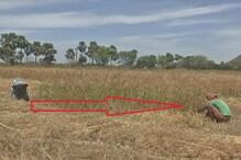 COVID-19: गेहूं कटाई के दौरान छोटे किसानों के बीच सोशल दिखी डिस्टेंसिंग
