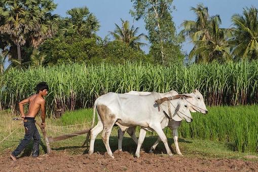 गन्ना 'पर्ची' की अव्यवस्था में पिस रहे हैं यूपी के किसान