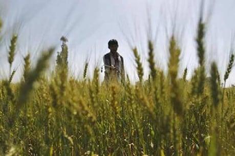 सरकार का फैसला- लॉकडाउन में किसानों को फसल की कटाई करने और सड़क पर  टैक्टर ले जाने की इजाजत