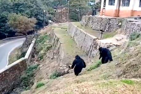 उत्तराखंड में ITBP के 2 जवानों ने 'भालू' बनकर भगाए कैंप से बंदर, देखें VIDEO