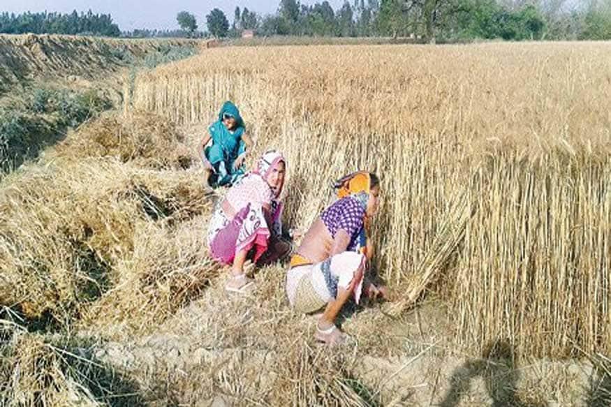 40000 crore increase in mgnrega, allocation of mgnrega, job boost, Rural economy, Finance Minister Nirmala Sitharaman, Mahatma Gandhi National Rural Employment Guarantee Scheme, MGNREGS expenditure, agriculture, labour, farmers, modi governmnet, मनरेगा के बजट में 40,000 करोड़ रुपये की वृद्धि, मनरेगा का आवंटन, नौकरी में वृद्धि, ग्रामीण अर्थव्यवस्था, वित्त मंत्री निर्मला सीतारमण, महात्मा गांधी राष्ट्रीय ग्रामीण रोज़गार गारंटी योजना, कृषि, श्रमिक, किसान, मोदी सरकार
