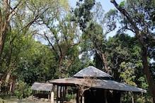 बिहार: इस गांव से अचानक 'गायब' क्यों हो गए चमगादड़? मंथन में जुटा वन विभाग