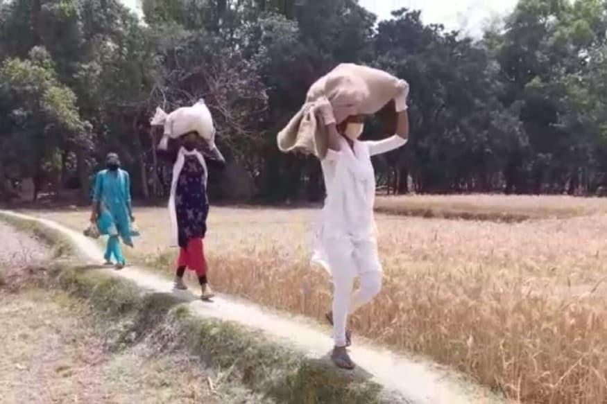 सवारी के अभाव में हाथ ठेले और सिर पर ढोती हैं राशन की बोरियां In the absence of riding, hand carts and head bags carry ration bags