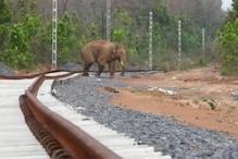 नशे में चूर शख्स कुल्हाड़ी लेकर अकेले हाथी से निपटने दौड़ा, फिर.....