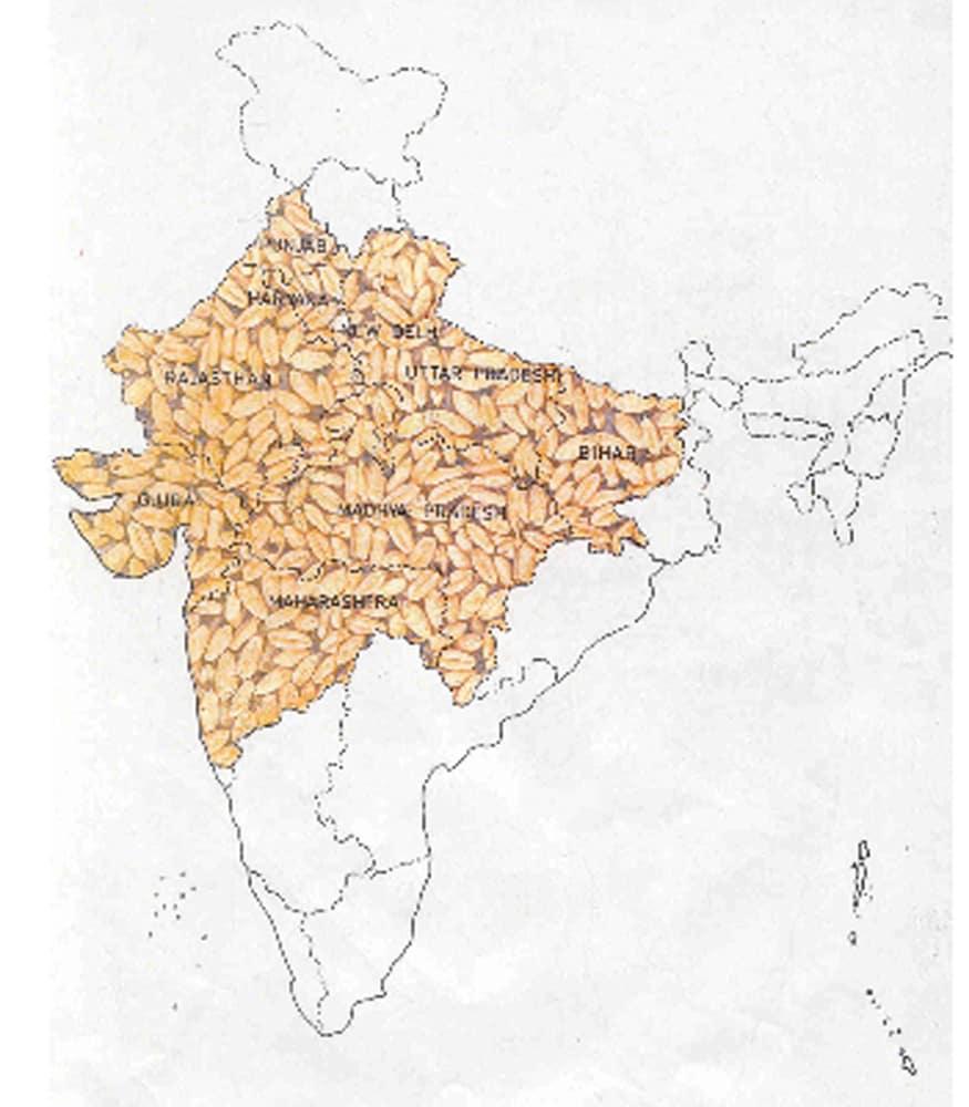 Wheat purchasing, Wheat Procurement in haryana, haryana mandi, Haryana farmers, Meri Fasal Mera Byora, Agriculture, FCI and Food and Supplies Department, Covid-19, गेहूं की खरीद, हरियाणा में गेहूं की खरीद, हरियाणा की मंडी, हरियाणा के किसान, मेरा फसल मेरा ब्योरा, कृषि विभाग, एफसीआई, खाद्य और आपूर्ति विभाग, कोविड-19
