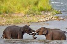 World Environment Day: हाथी इसलिए है हमारे पर्यावरण का बड़ा साथी?