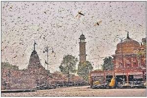दिल्ली में भी हो सकता है टिड्डियों का हमला, यहां पढ़ें आज के अखबारों की सुर्खिया