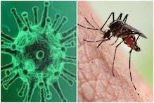 Fact Check: क्या वाकई मच्छरों के काटने से फैलता है कोरोना वायरस