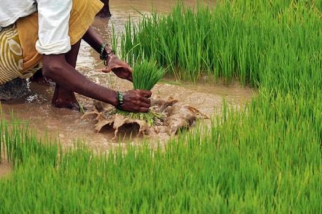 डॉ कलाम ने कहा था- 'बिहार में दूसरी हरित क्रांति की संभावना'! अब कोरोना संकट को 'वरदान'बनाने के प्लान पर शुरू हुआ काम