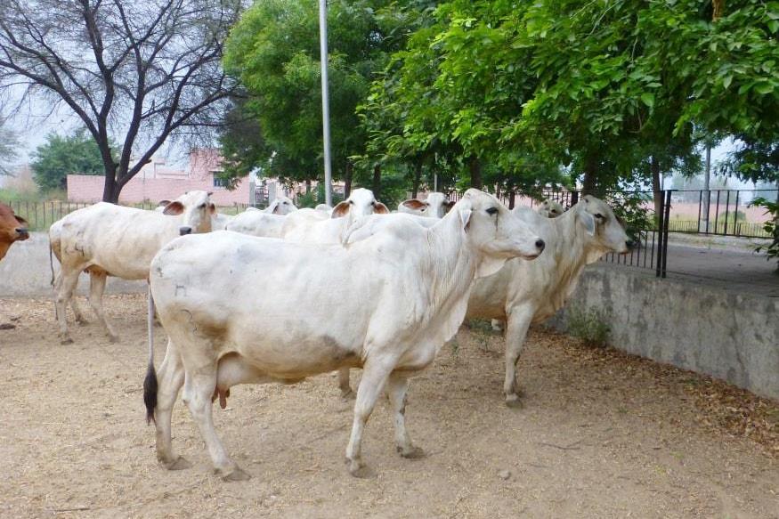 business ideas after lockdown, लॉकडाउन के बाद बिजनेस का आइडिया, दूध का व्यापार कैसे करे, दूध बेचने का तरीका, दूध से कमाई, दूध डेयरी प्लांट, दूध उत्पादन में करियर, दूध डेयरी लोन, dairy business, dairy business in india, dairy business plan, dairy business ideas, dairy business for sale, dairy business plan in indiam dairy business loan, National Dairy Development Board, नेशनल डेयरी डेवलपमेंट, milk production in india, भारत में दूध का कुल उत्पादन