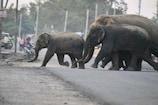 लॉकडाउन के बीच शहर के करीब आए हाथी, वन विभागने मुनादी कर लोगों को किया अलर्ट