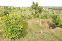 RAISEN : इनसे मिलिए ये हैं भोजपुर के ट्री-मैन, अब तक लगा चुके हैं लाखों पेड़