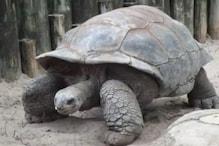 800 बच्चे पैदा करने के बाद रिटायर हुआ 100 साल का डिएगो, बचा ली अपनी प्रजाति