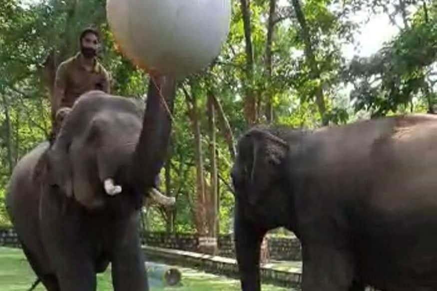 राजाजी टाइगर रिज़र्व में हाथियों का ...