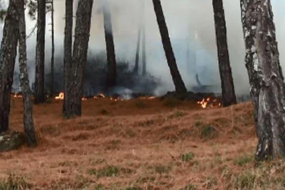 उत्तराखंड में बड़ी संख्या में वन संपदा वनाग्नि के कारण नष्ट हो जाती है.