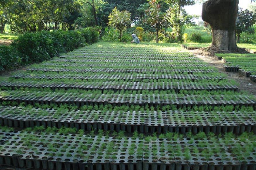 medicinal plants hrdi 3, संस्थान की मदद से जिसने भी मेडिसिनल प्लांट्स की खेती शुरु की है, वह अच्छी फ़सल ले रहा है और अच्छा कमा रहा है.