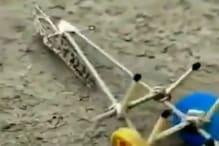 Viral Video: खेतों को नुकसान पहुंचाकर अब टिड्डों ने चलाया हल, लोगों ने ये कहा