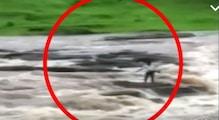 मछली मारने गए युवक को बहा ले गयी उफनती कालीमाचक नदी, देखें VIDEO