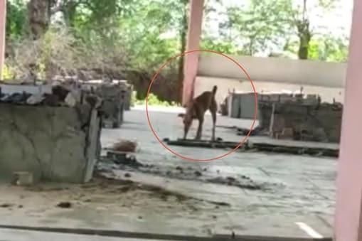 शमशान के पास कुत्तों (Dogs) को भी भटकते देखा गया, जो अपशिष्ट पर मुंह मारते पाया गया.