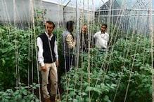 घर में सब्जी उगाकर दिल्ली की नौकरी से अच्छी कमाई कर रहा है अल्मोड़ा का किसान