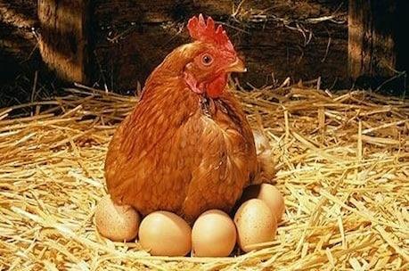 अंडा या चिकन शरीर के लिए कौन सा प्रोटीन ज्यादा जरूरी, जानें
