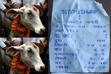 महाराष्ट्र: क्यों पानी से भी कम दाम पर बिक रहा गाय का दूध, जानें वजह