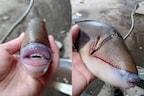 समंदर में मिली अनोखी मछली, इंसानों की तरह दिखते हैं होंठ और दांत, देखिए तस्वीरें
