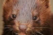 कितनी बार बीमारियां फैलने पर लाखों जानवरों को मिली मौत की नींद?