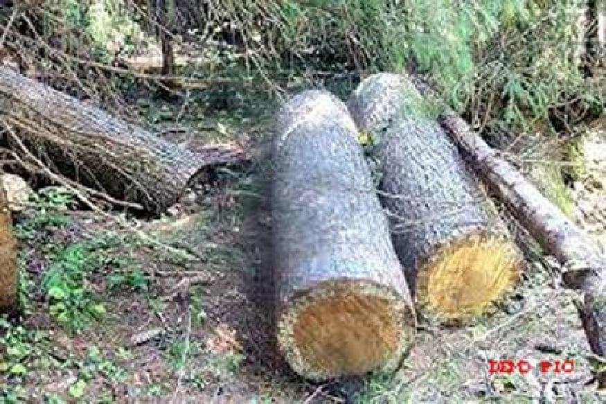 सरकारें जंगल काटती रहेंगी, पेड़ लगाती रहेगी. हमारी कथित चिंता कोरी लफ्फाजी के अलावा कुछ नहीं.