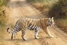 बाघ और हाथियों ने यहां ग्रामीणों का जीना किया मुश्किल, एक की गई जान