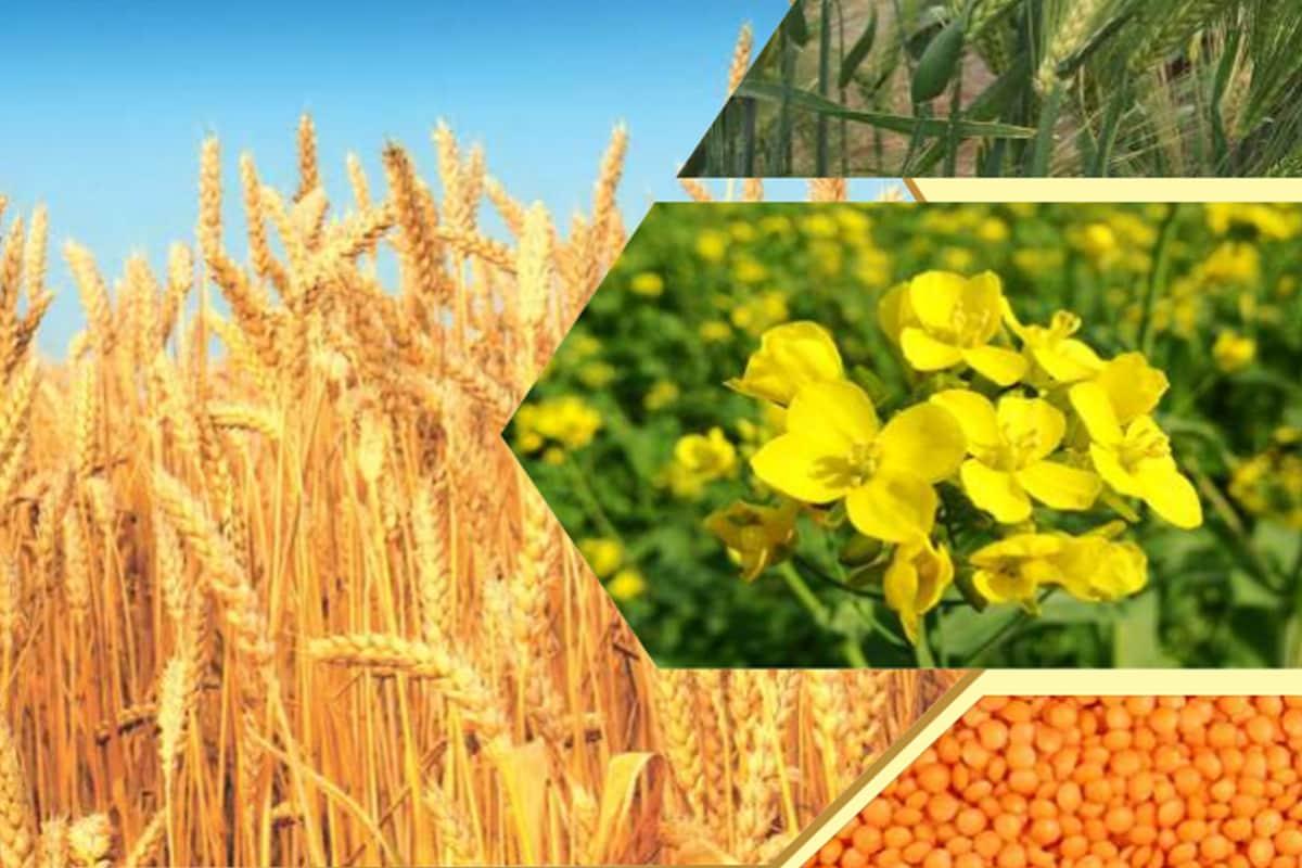 What in three agricultural ordinances, Agricultural reform, EC Act-1955, msp, farmers agitation, Strikes in mandis, तीन कृषि अध्यादेशों में क्या है, कृषि सुधार, आवश्यक वस्तु अधिनियम, एपीएमसी-मंडी, किसान आंदोलन, मंडियों में हड़ताल