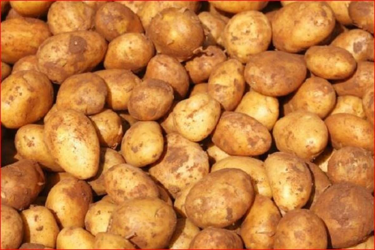 Potato Price today, wholesale rate of Potato, market price of aaloo, online Mandi bhav, Potato price hike in up delhi, Cold Storage, Ministry of Agriculture, आलू का भाव, आलू का थोक रेट, आलू का बाजार भाव, ऑनलाइन मंडी भाव, दिल्ली, मुंबई में आलू का दाम, कोल्ड स्टोरेज, कृषि मंत्रालय