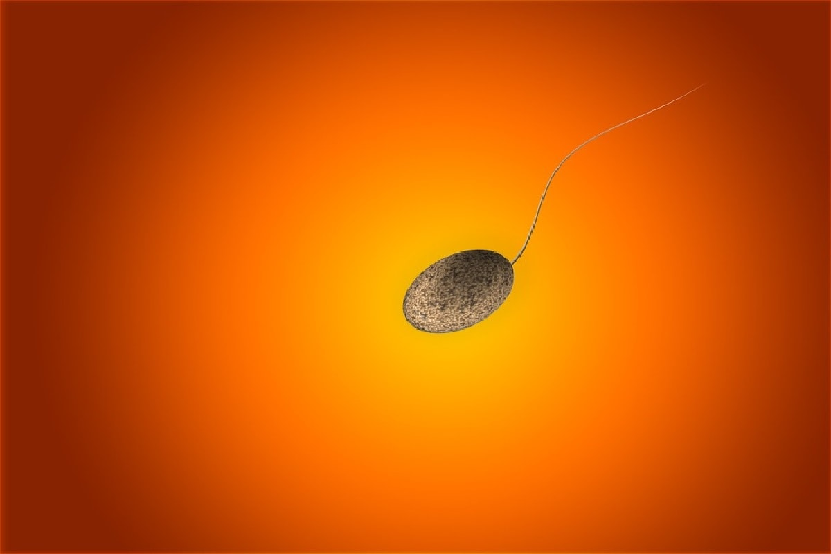 Sperm, crustacean, Palaeontologist, Fossil, Amber, ostracod, Reproduction, giant sperm, Evolution,