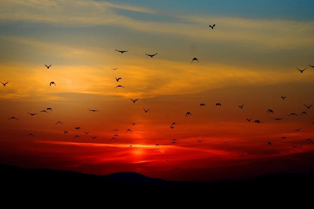 Sunset, Red, scattering of light,